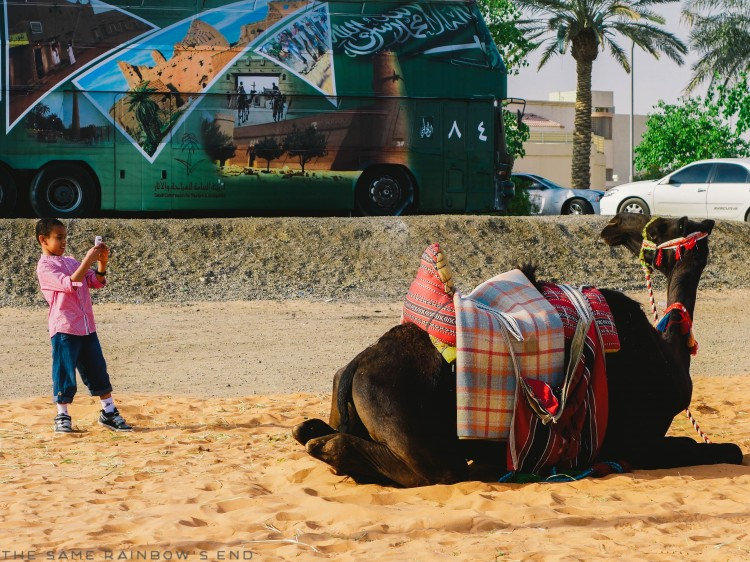 saudi national day camel photo