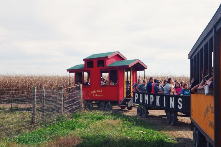 pumpkin patch train